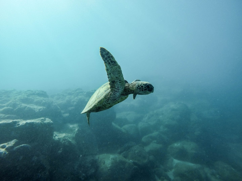 The Oz Blog – Mon Repos Turtle Conservation Centre