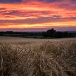 A pink and orange sunrise over fields